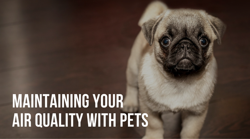 pets-and-air-quality-cincinnati-ohio-hvac